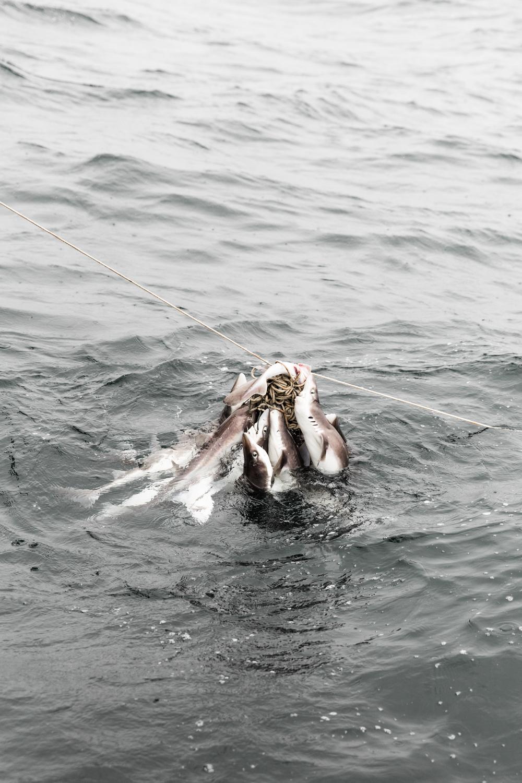 GRybus-Blog-Dogfish-9992.jpg
