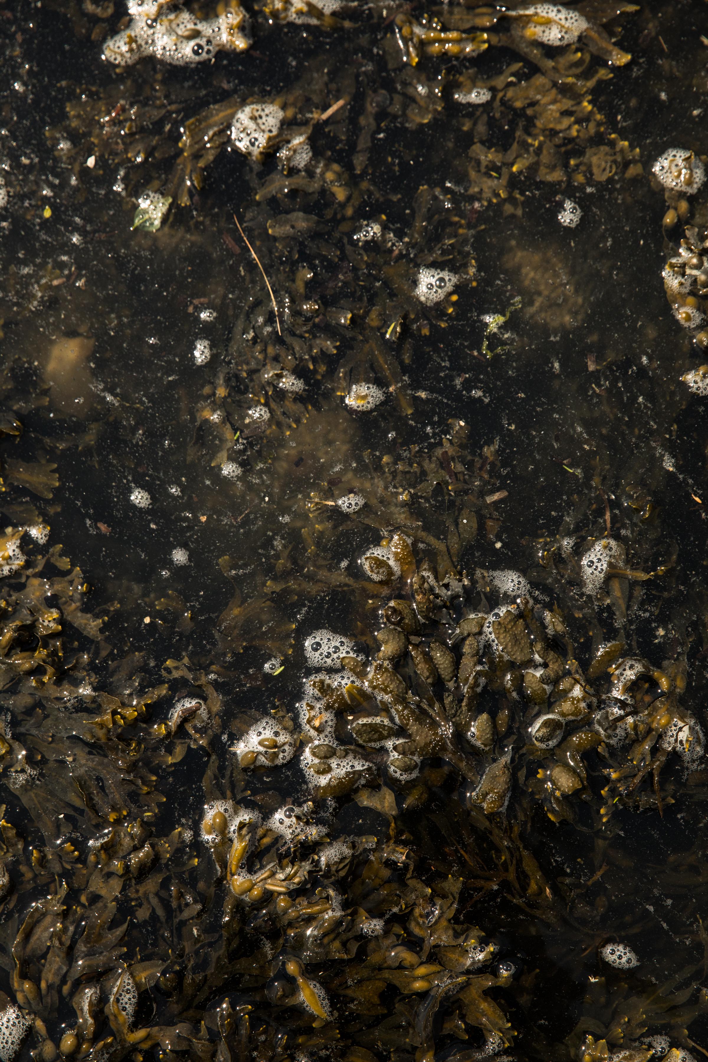 GRybus-Blog-Seaweed-9942.jpg