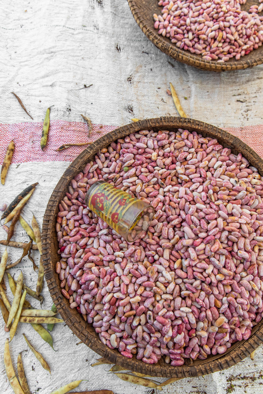 Pink bean variety, Zanzibar