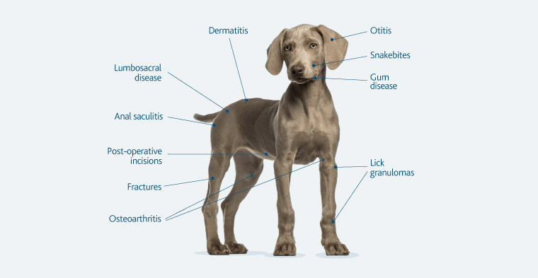 dogchartconditions_copy.png