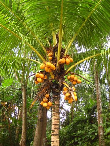 place_coconut.jpg