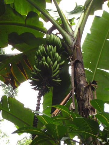 place_banana.jpg