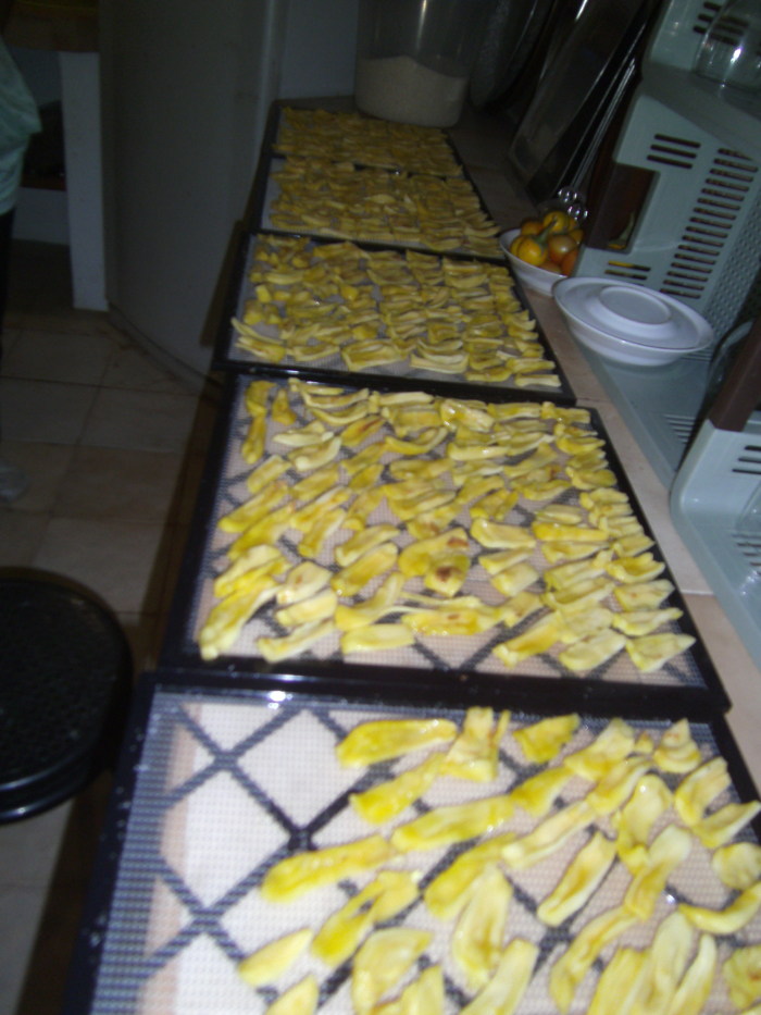 Jackfruit drying3