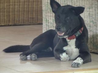Dogs at Jiwa Damai (3)