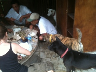 Lumbung and dogs