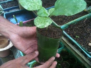 Plant nursery (2)