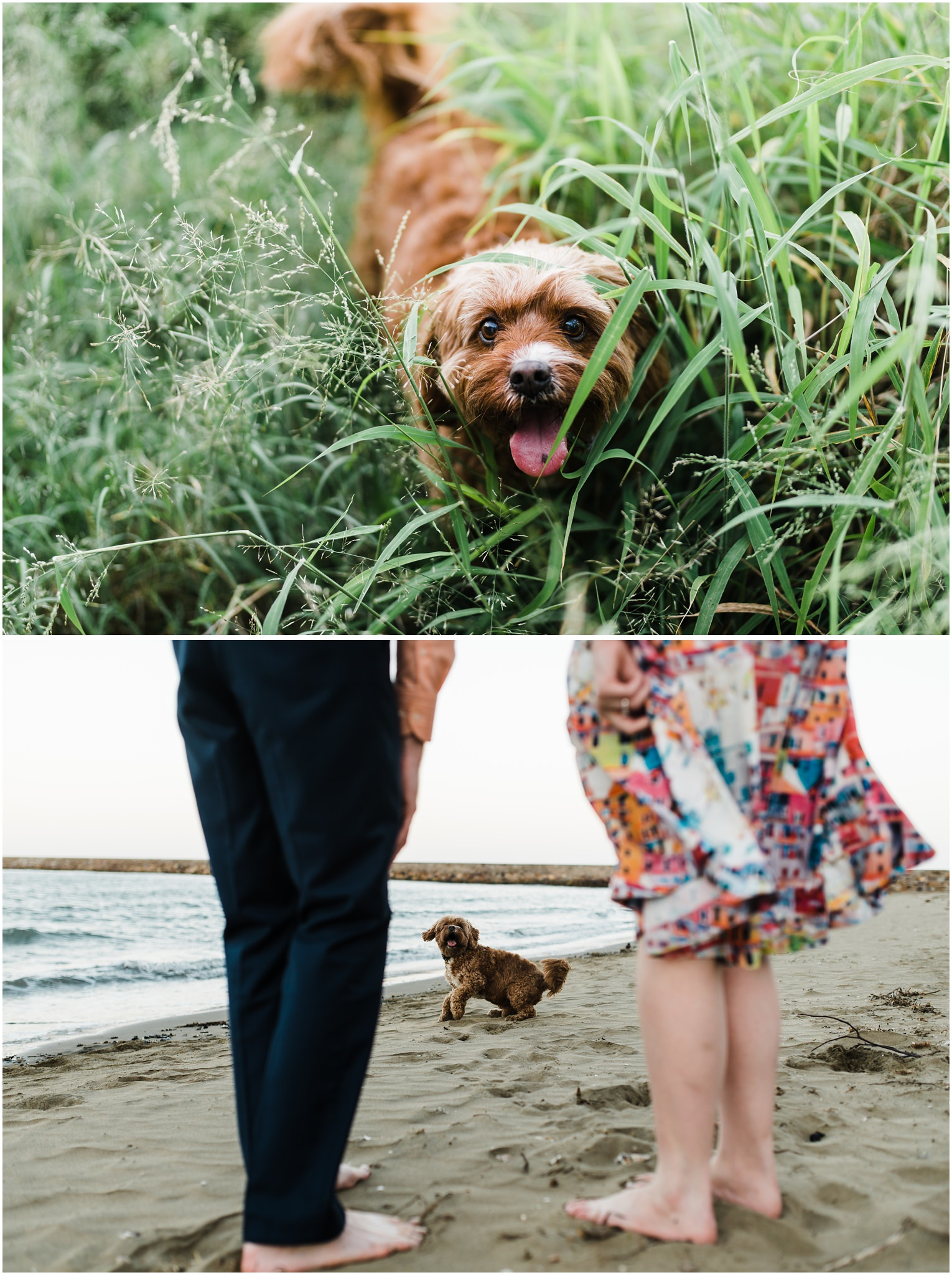brisbane-brighton-sandgate-engagement-pet-photography-cute-doggo33.jpg