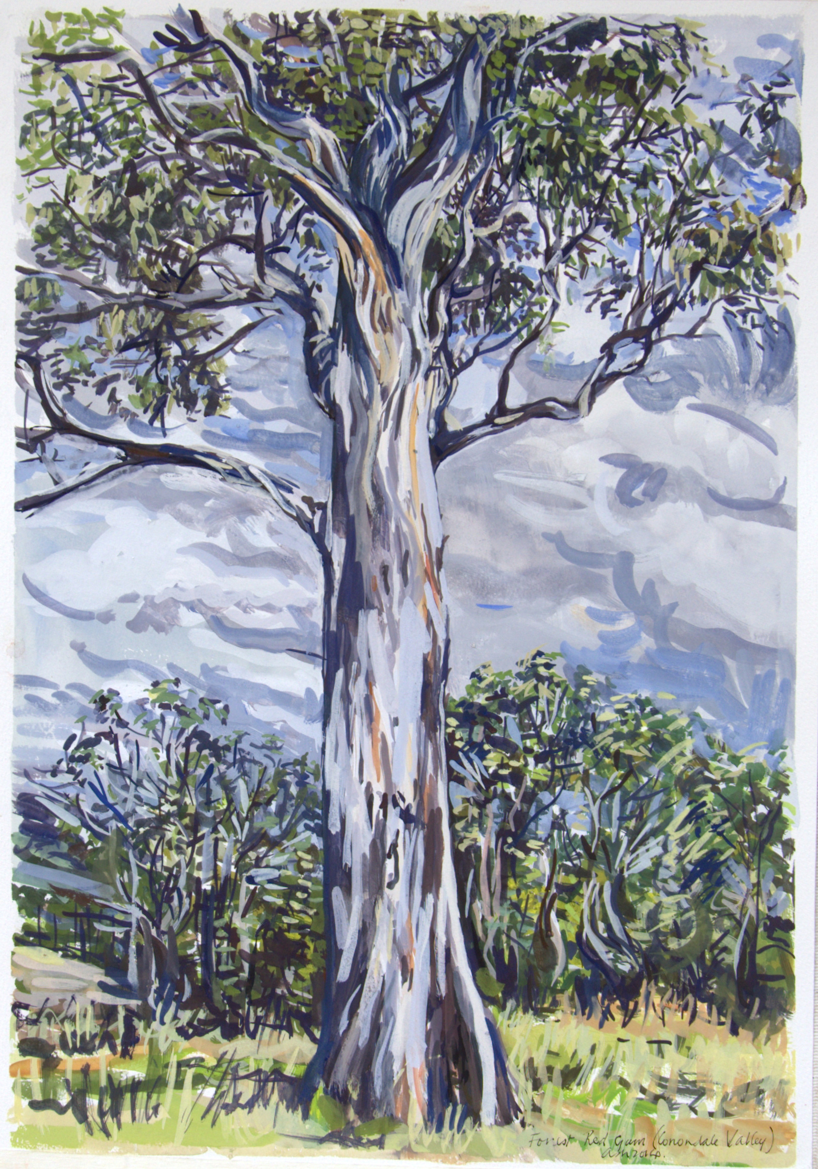 Forest Red Gum , 2013, gouache on paper