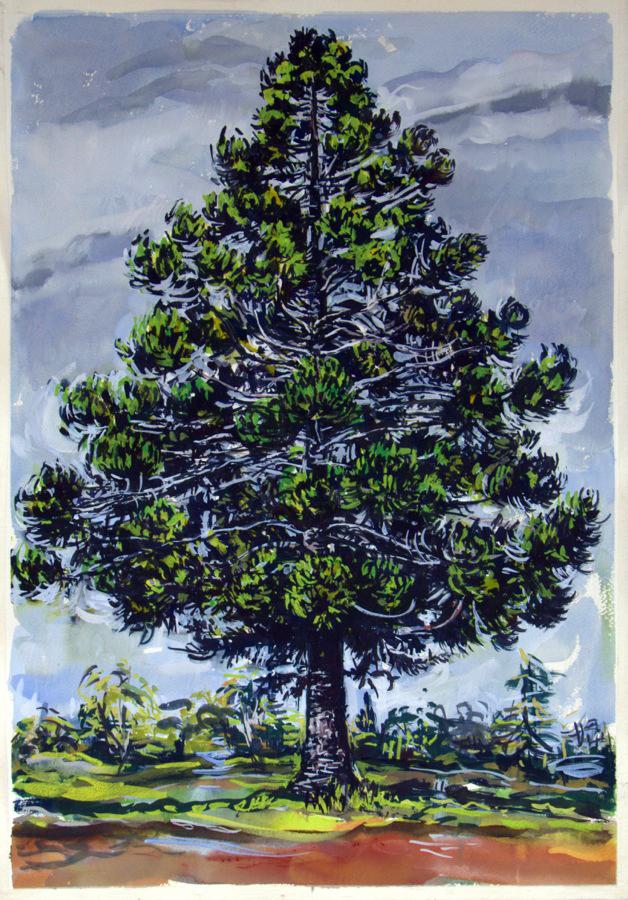 Hoop Pine , 2013, gouache on paper