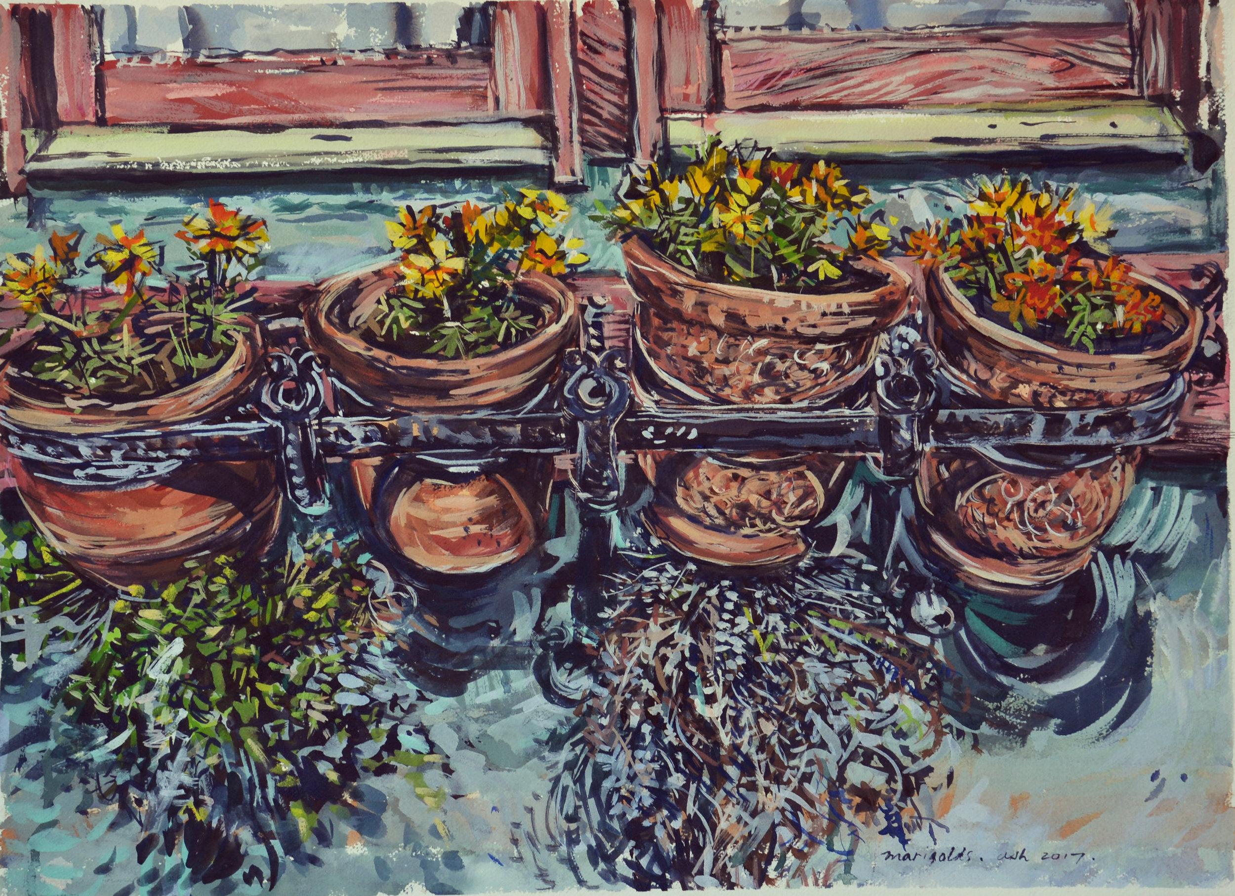 Marigold window box , 2017, gouache on rag paper, 46cm x 75cm