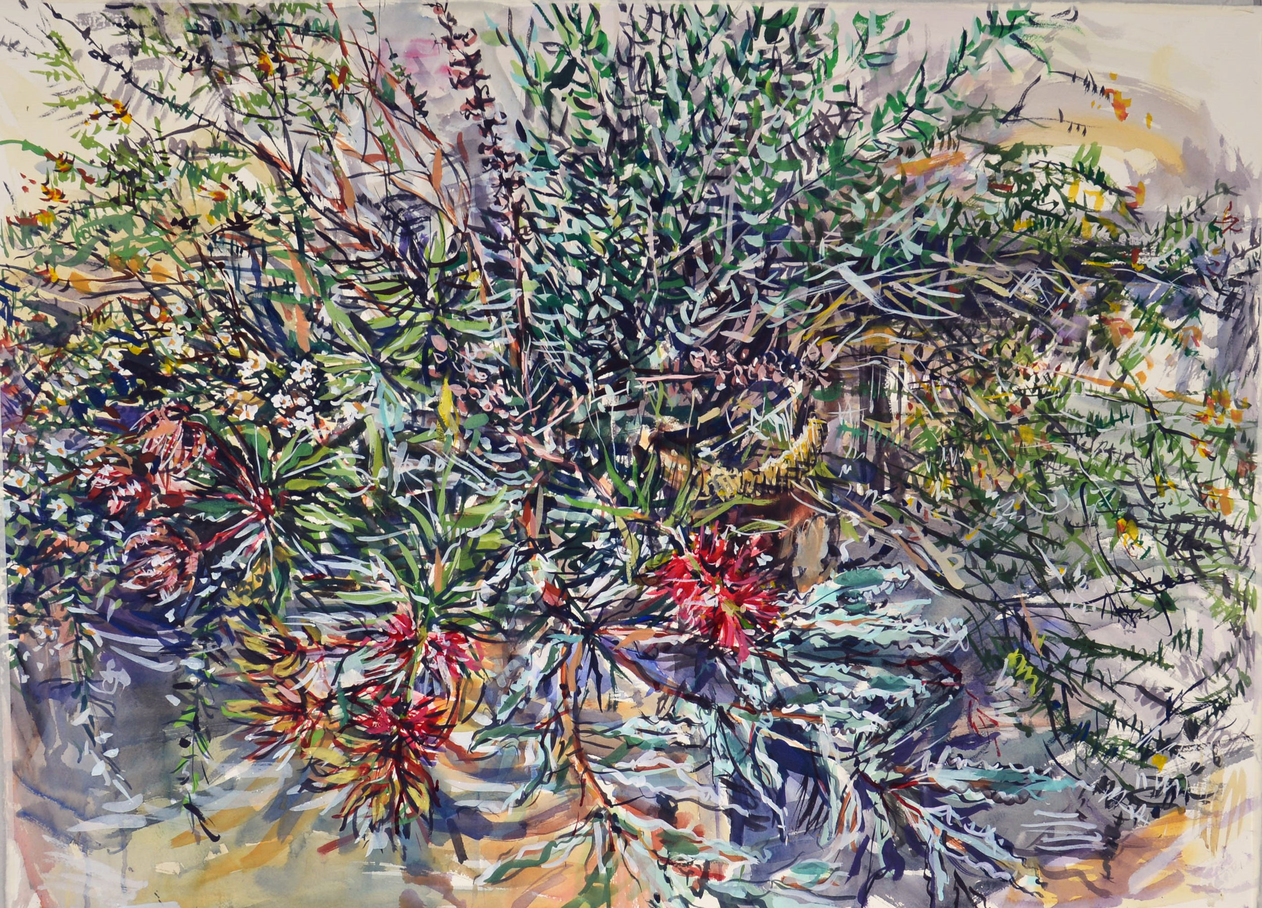 Wallum Bouquet 1 (with red bottlebrush and yellow pea flowers) 2018 gouache on rag paper 78 x 108cm