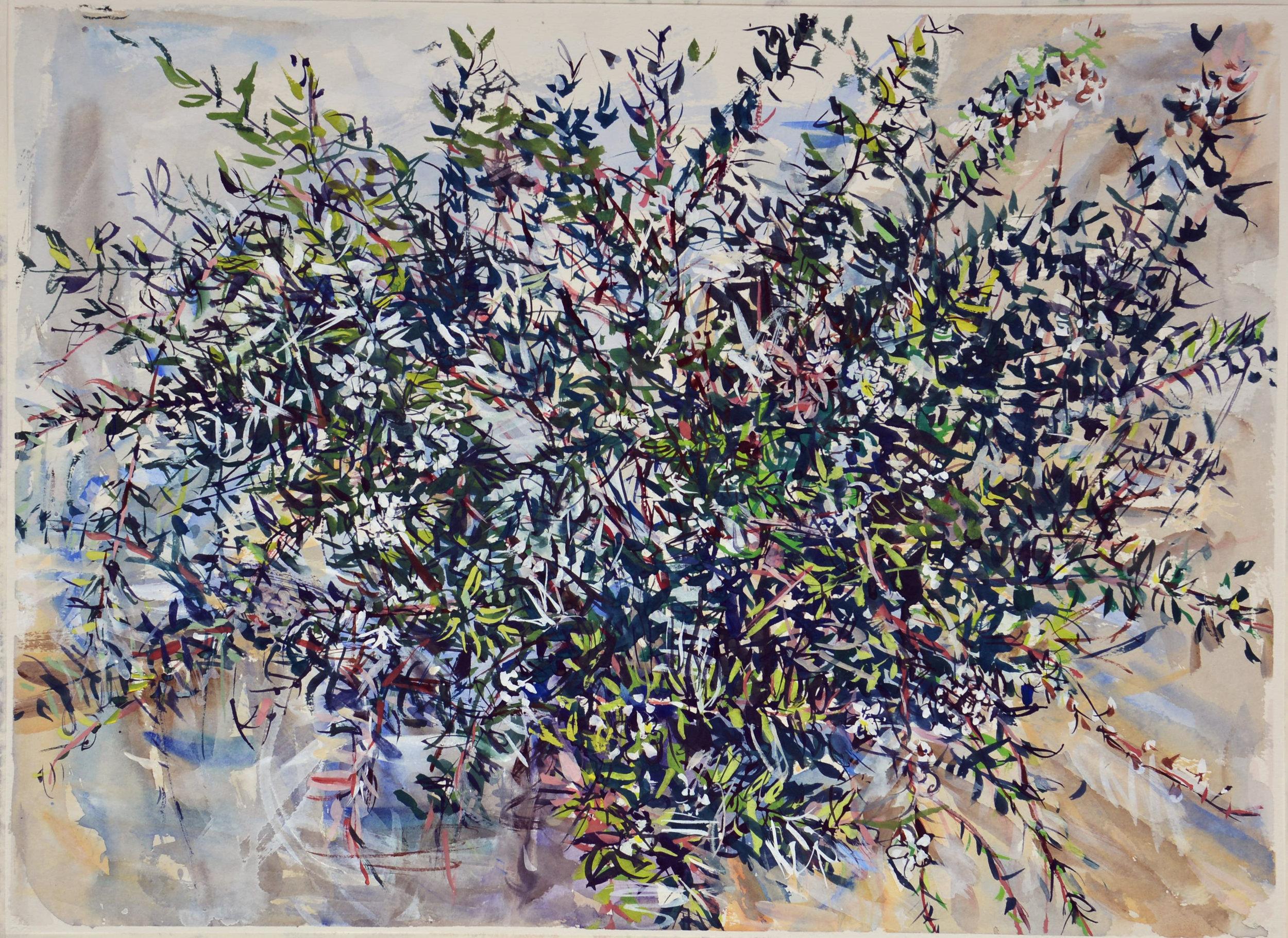 Wallum Bouquet 3 (with Leptospermum flowers) 2081 gouache on rag paper 57 x 77cm