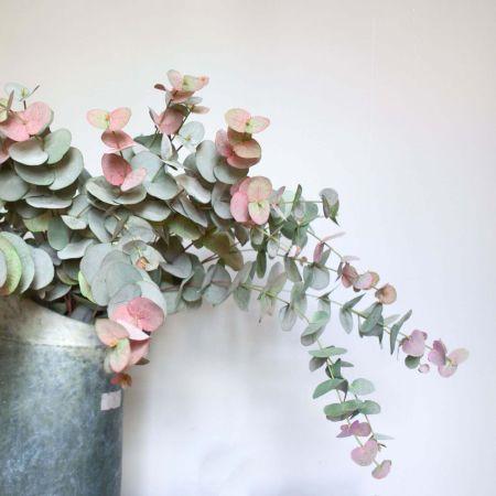 peach tint eucalyptus.jpg