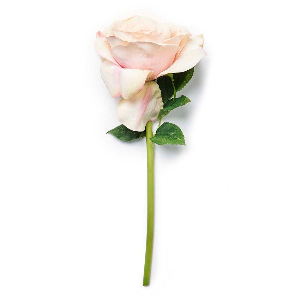 pink rose AA debenhams.png