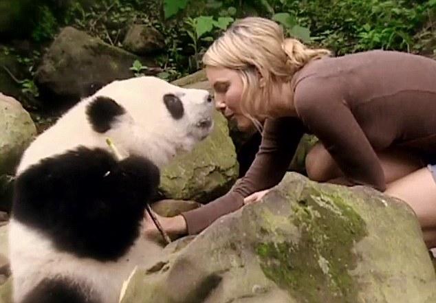 sneezing-baby-panda 7 .jpg