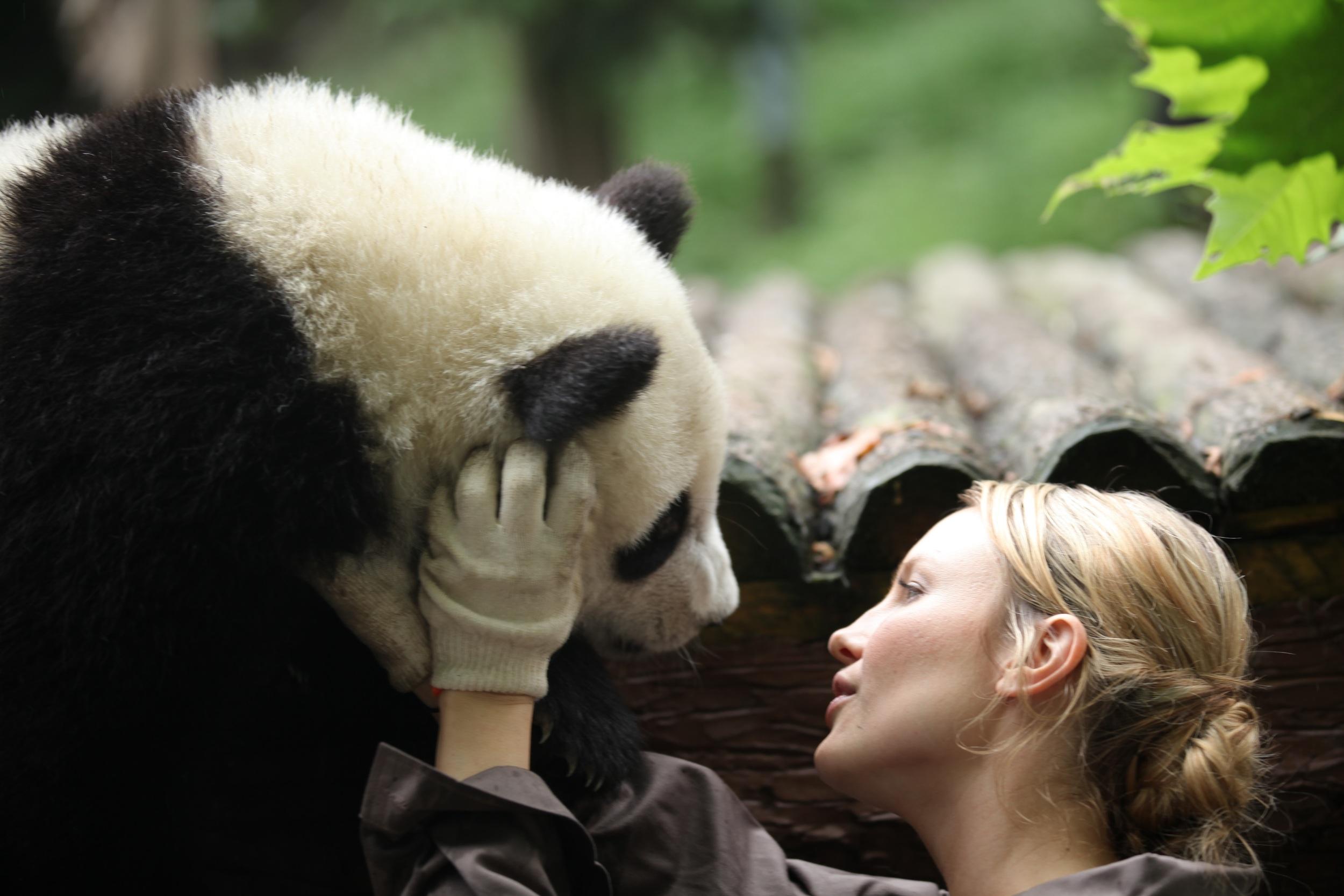sneezing-baby-panda 1.jpg