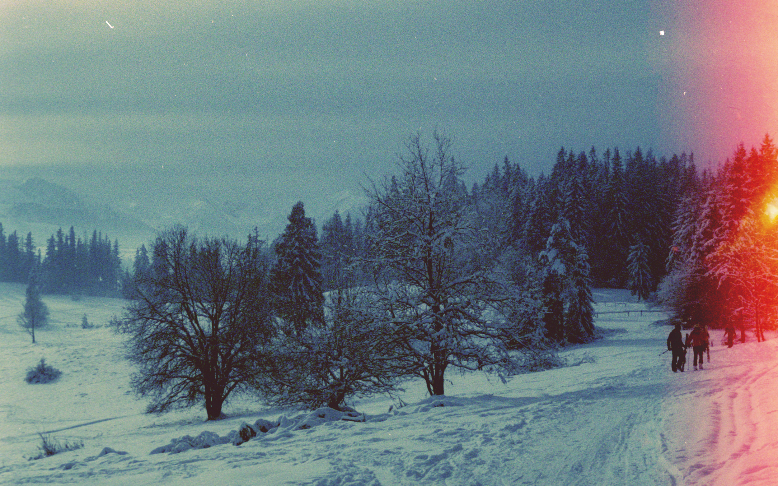 Enchanting+snow+forests+of+Poland+_+Karl+Mackie+Photography.jpeg