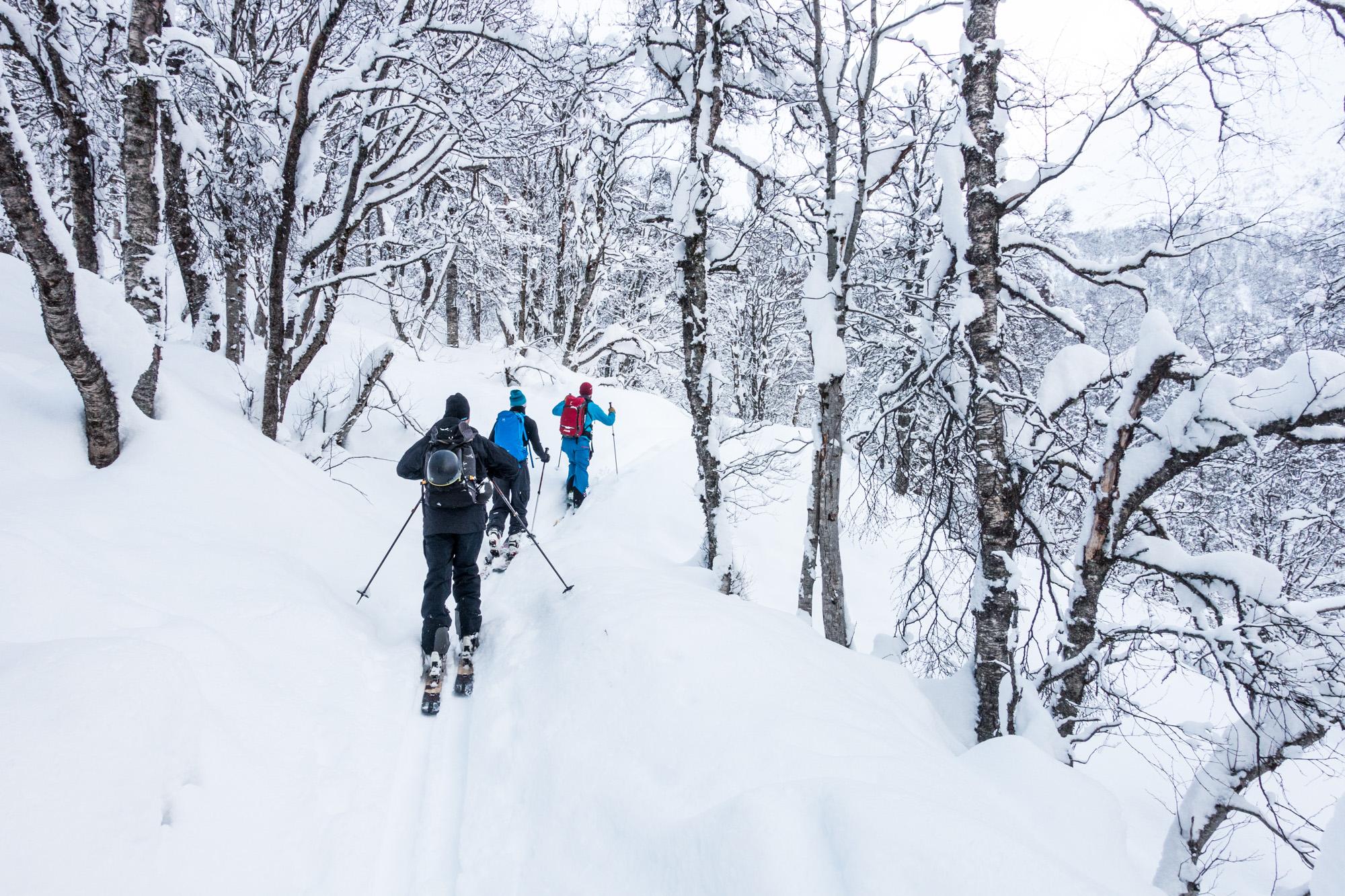 Snow, snow, snow and trees.