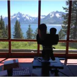 Field Lab in Teton National Park (photo by M. Stager).