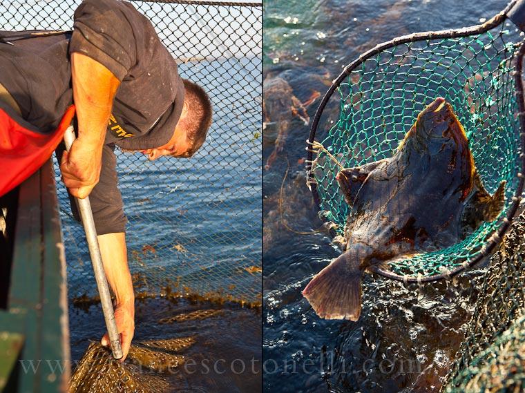 Fluke Fisherman