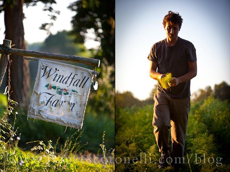 Windfall Farms