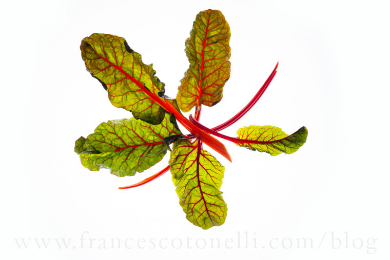 Swiss Chard Leaves