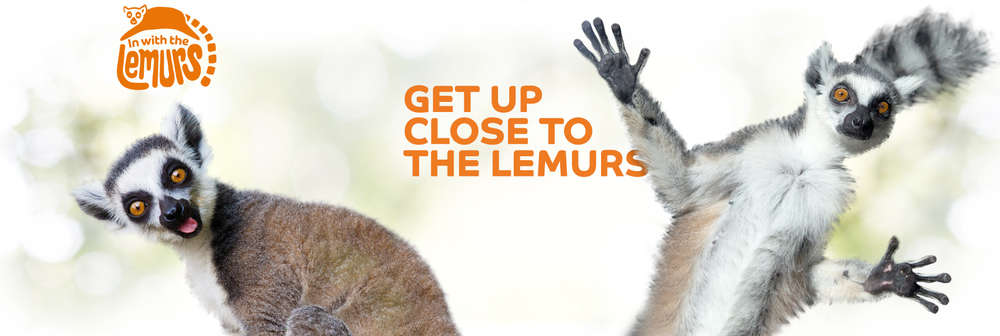 IN WITH THE LEMURS