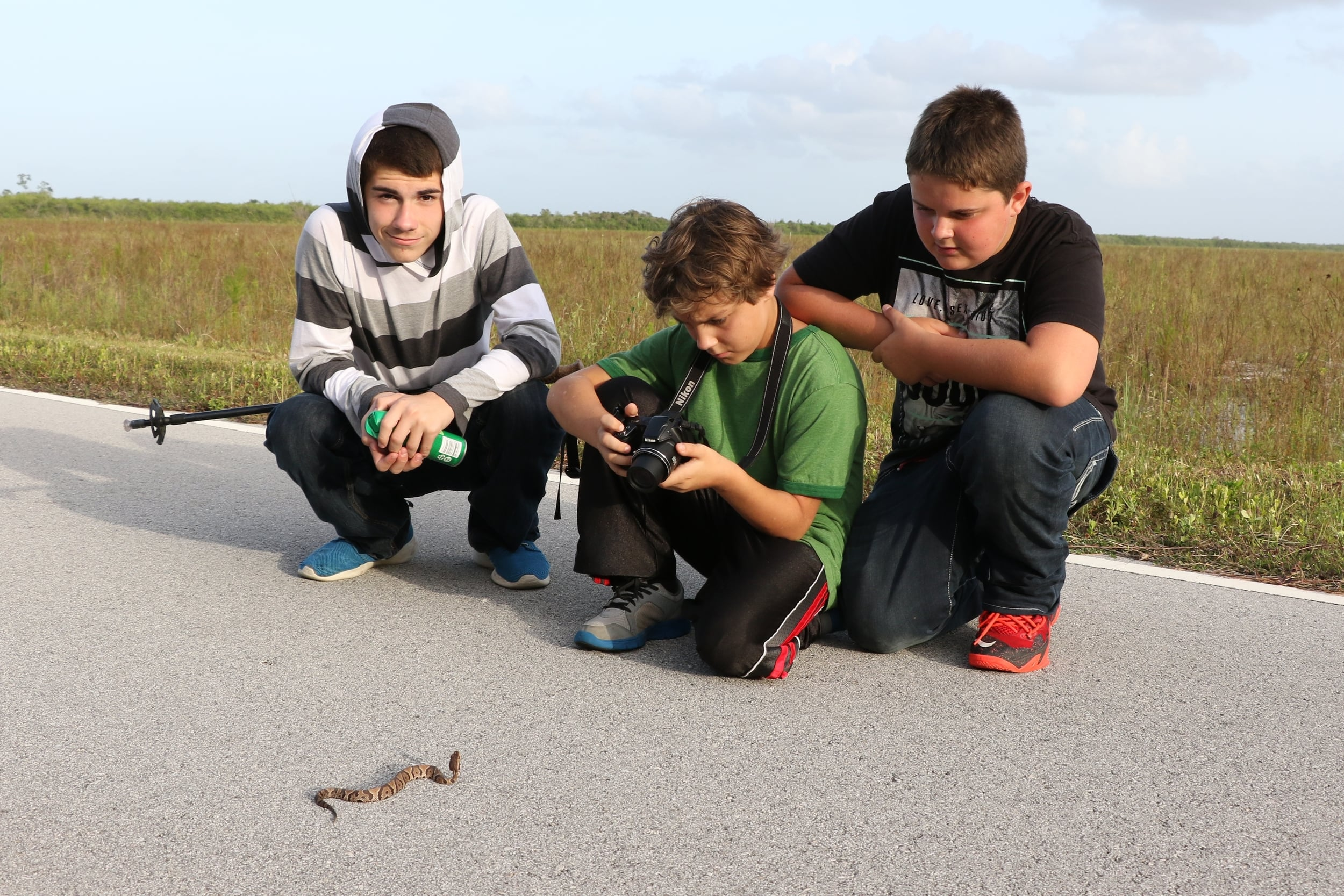 Florida Cottonmouth - This young snake was moved off the road. As you can see, they are every bit as dangerous and aggressive as most people think (sarcasm).