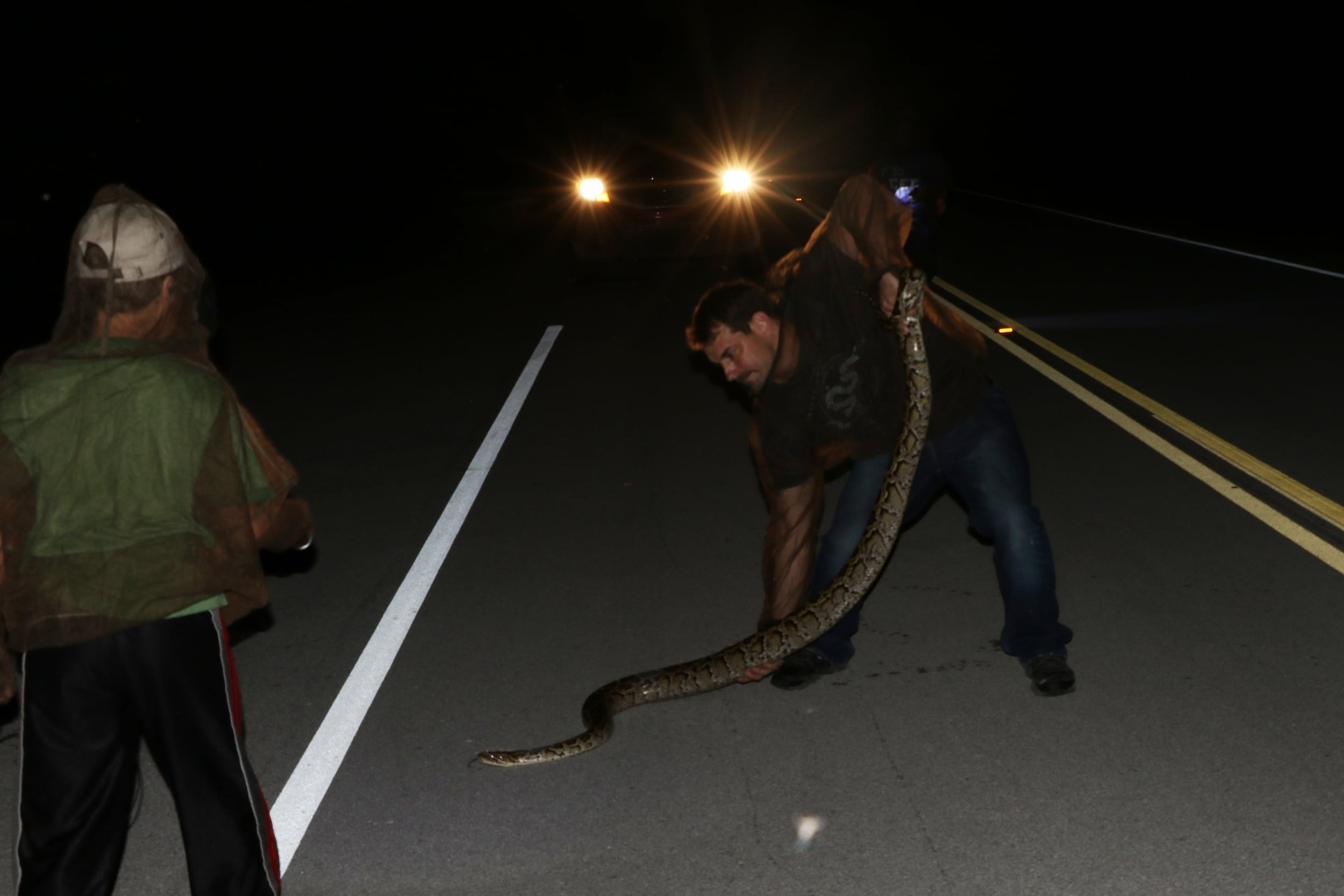 Burmese Python - That's me with the snake for size reference. While this may be blasphemous, I'm just going to say it. This was the funnest snake of the year. We cruised it half onto the road. We looked in disbelief as I slammed on the brakes. The snake doubled back into the vegetation. I ran after it and grabbed it. I wrestled it out of the tangles and the thing turned and bit me on the leg. I didn't feel pain, but I felt it. It struck a few more times before it settled down. Later, my leg had bled through my jeans. The natural high hid any inkling of a bite. In the end, it was no big deal, but like I said - it was FUN.