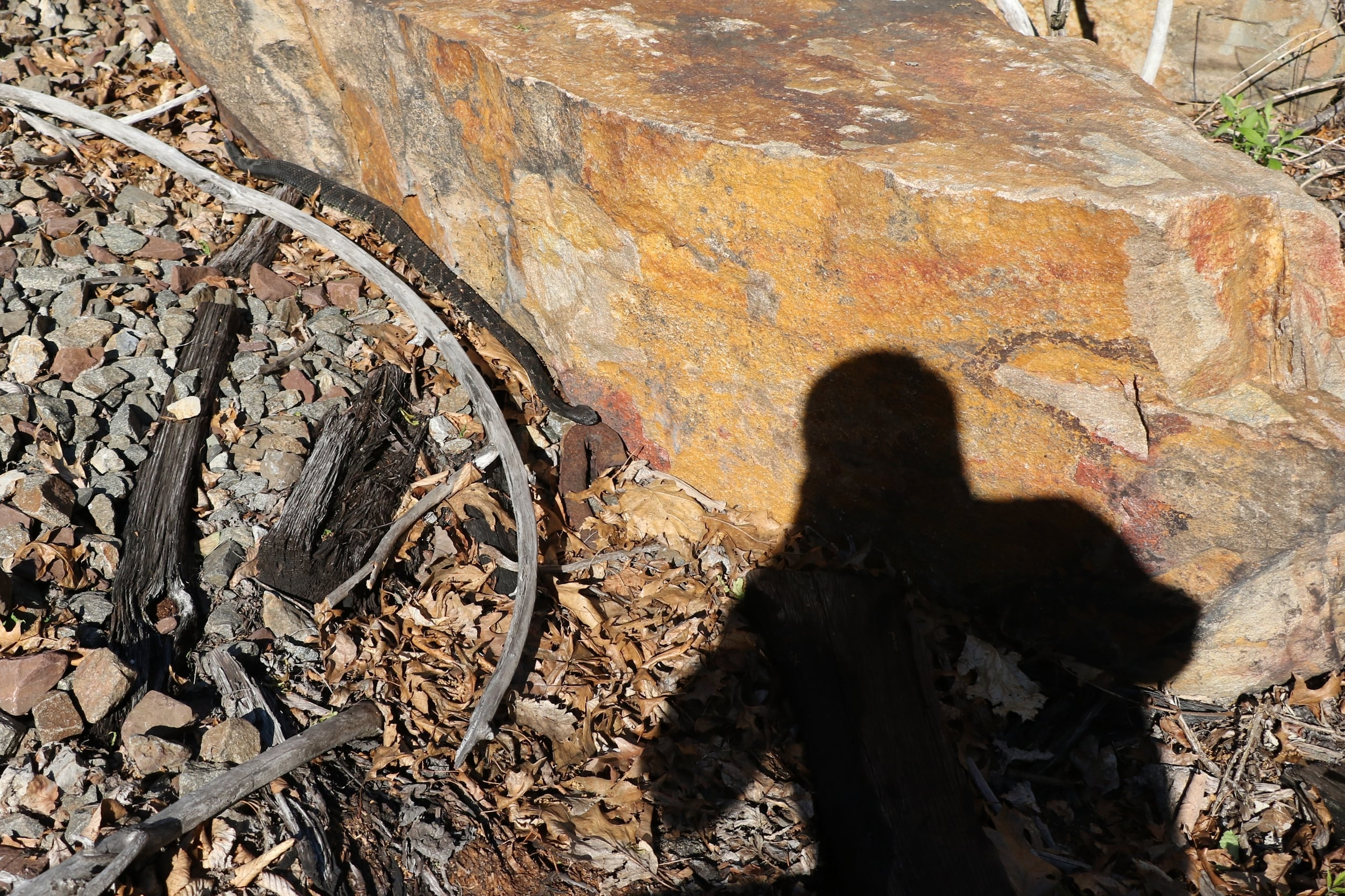 Timber Rattlesnake - I took this self-portrait with a snake we found in the Poconos on a group trip.