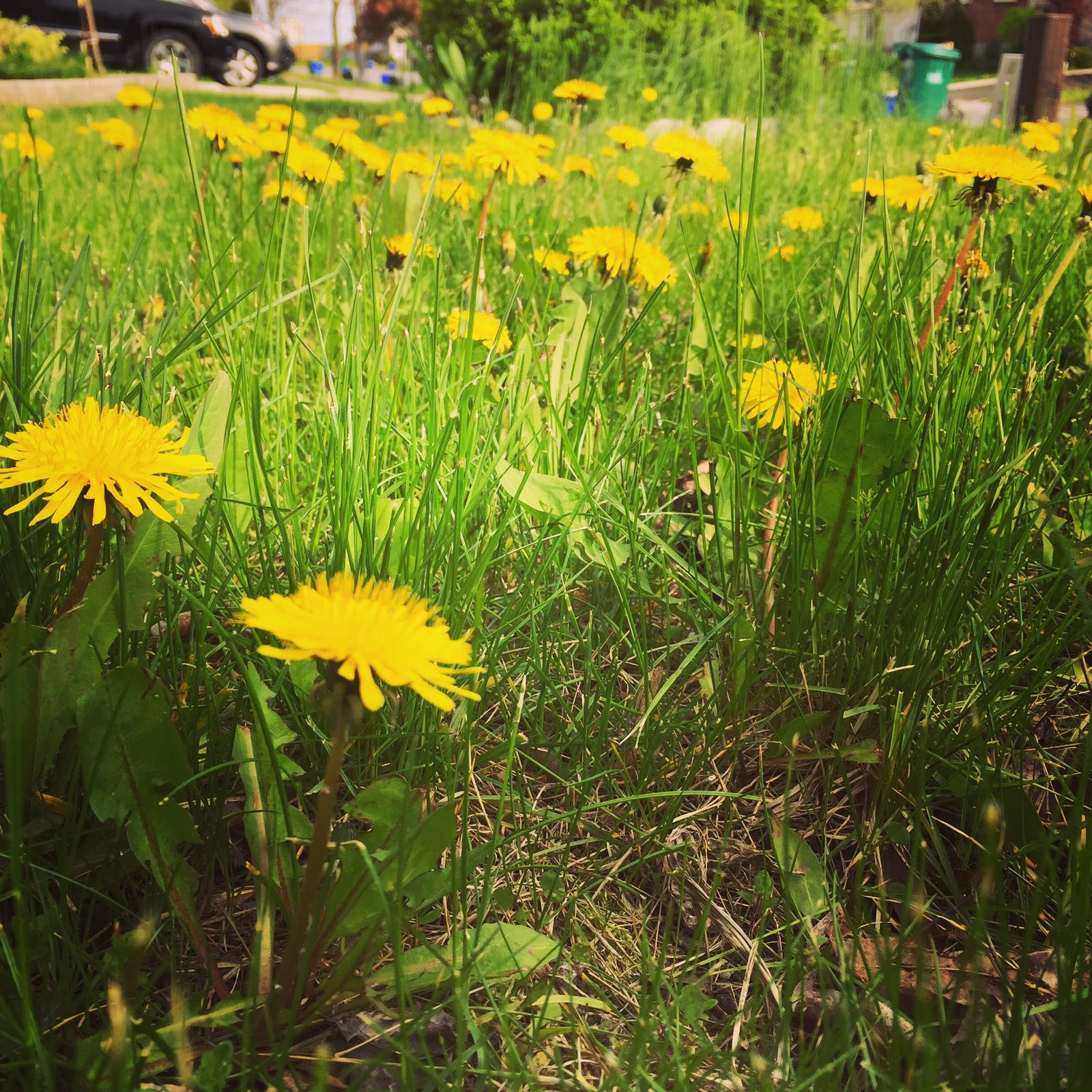 Mindfulness Meditation Dandelion Smile