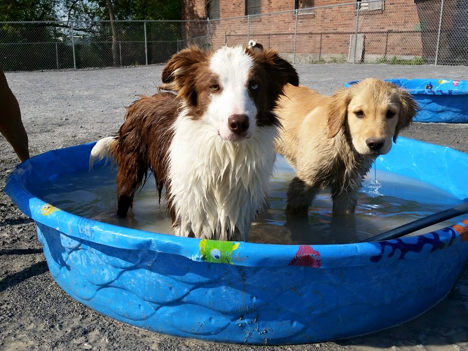 Cool dogs in a pool