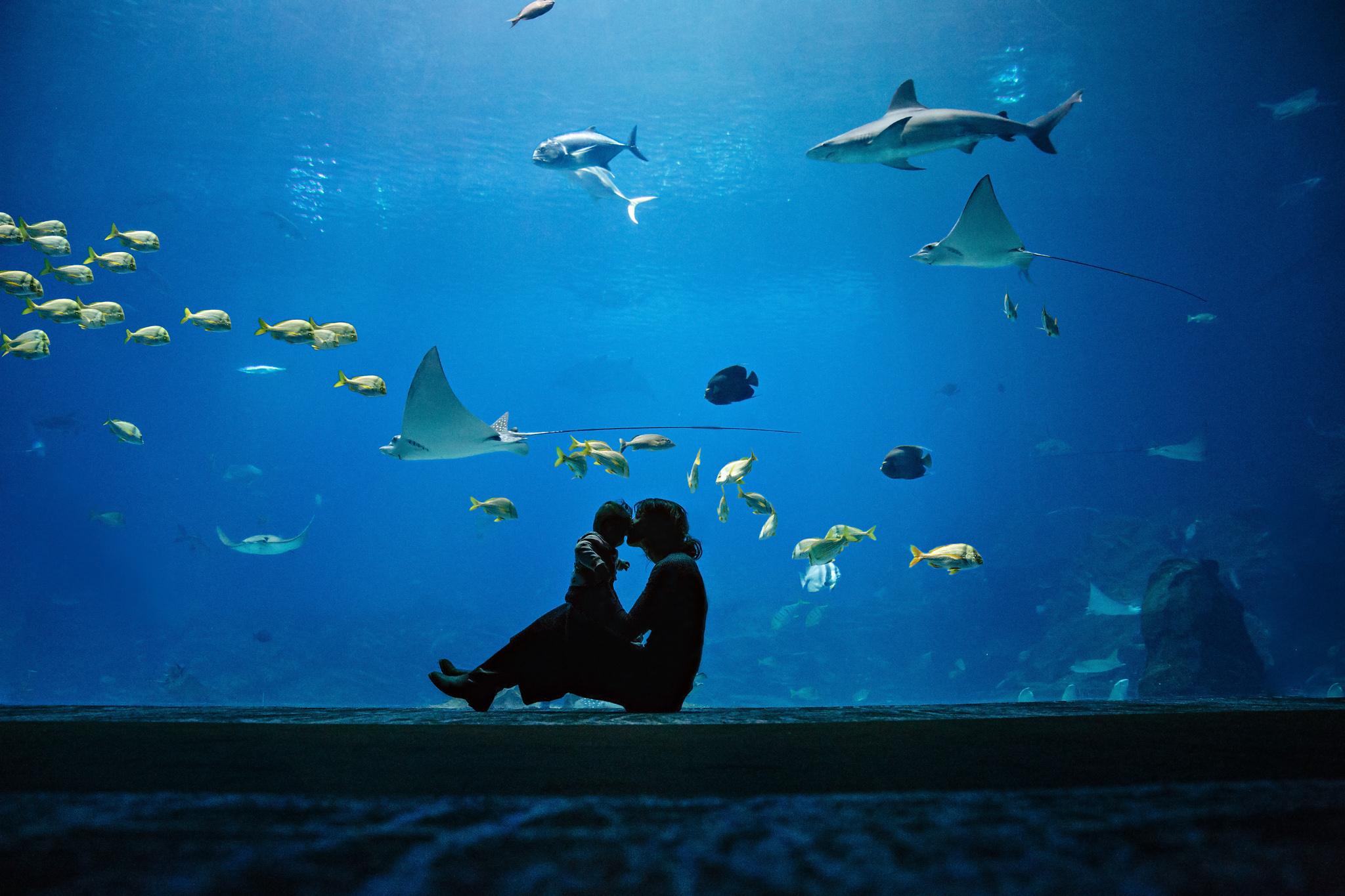 Aquarium 2 IG FB.jpg