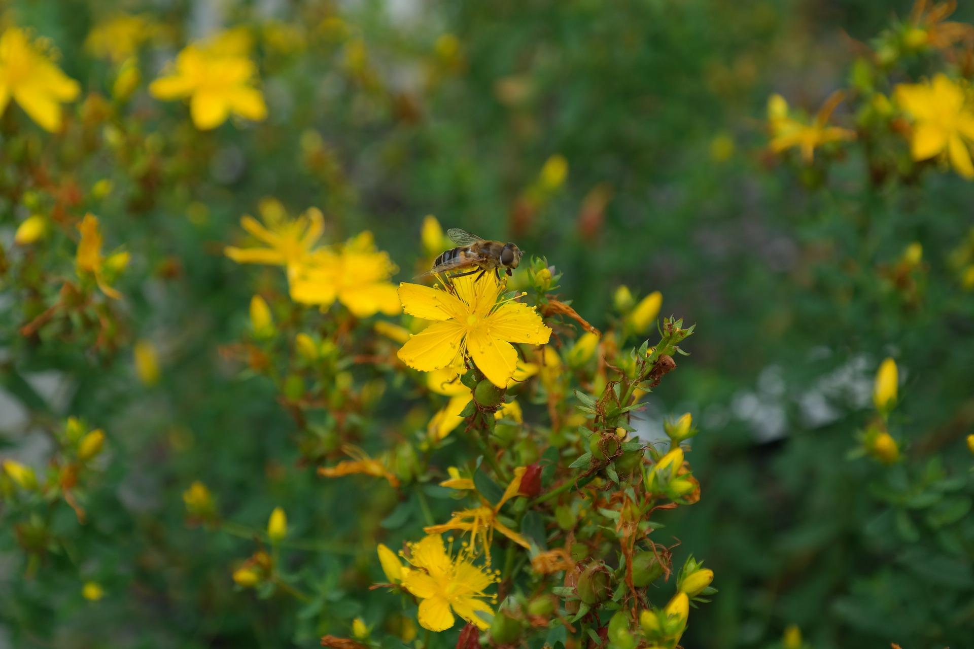 AriellaDaly_herbalist1