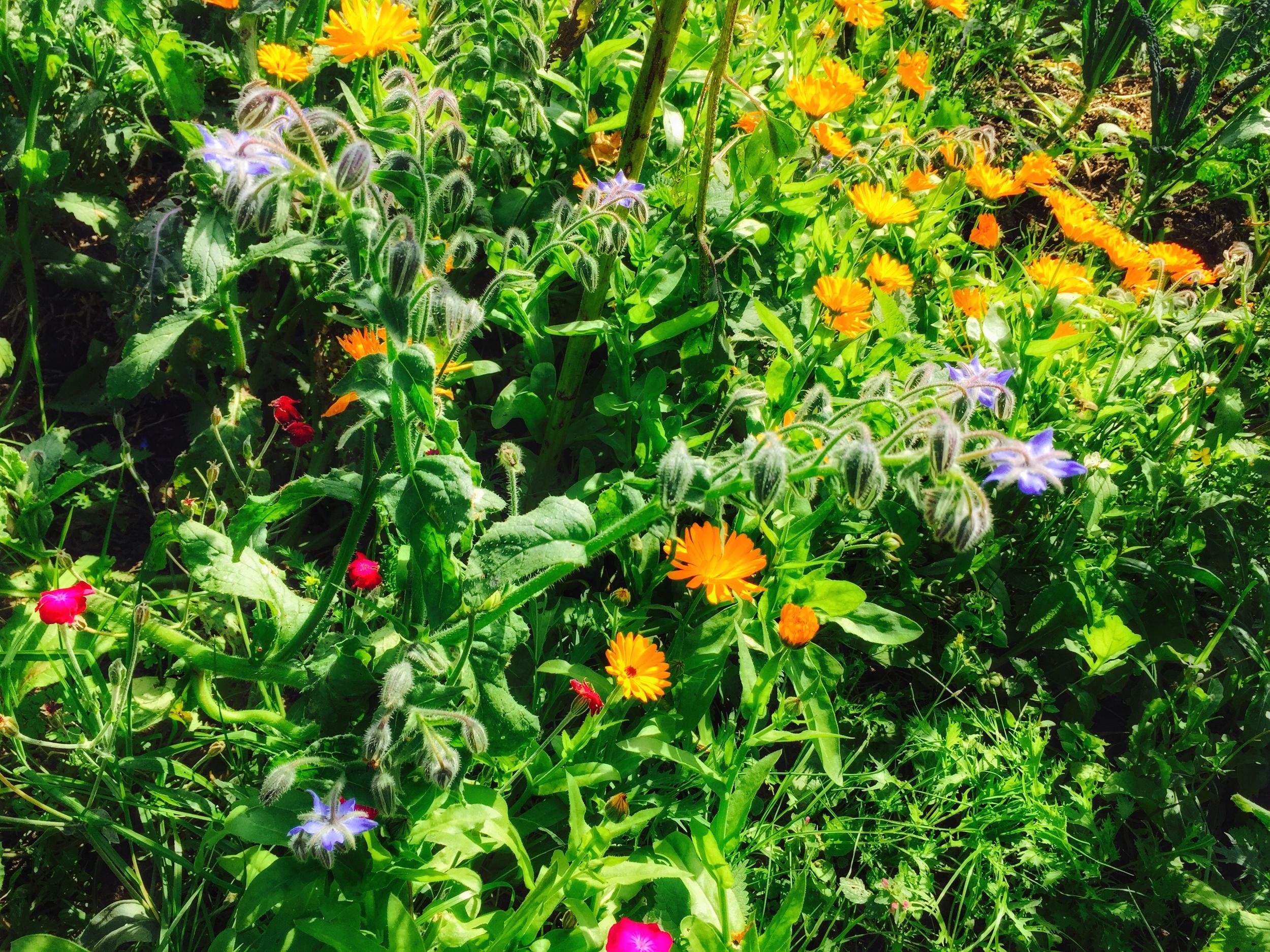 AriellaDaly_garden