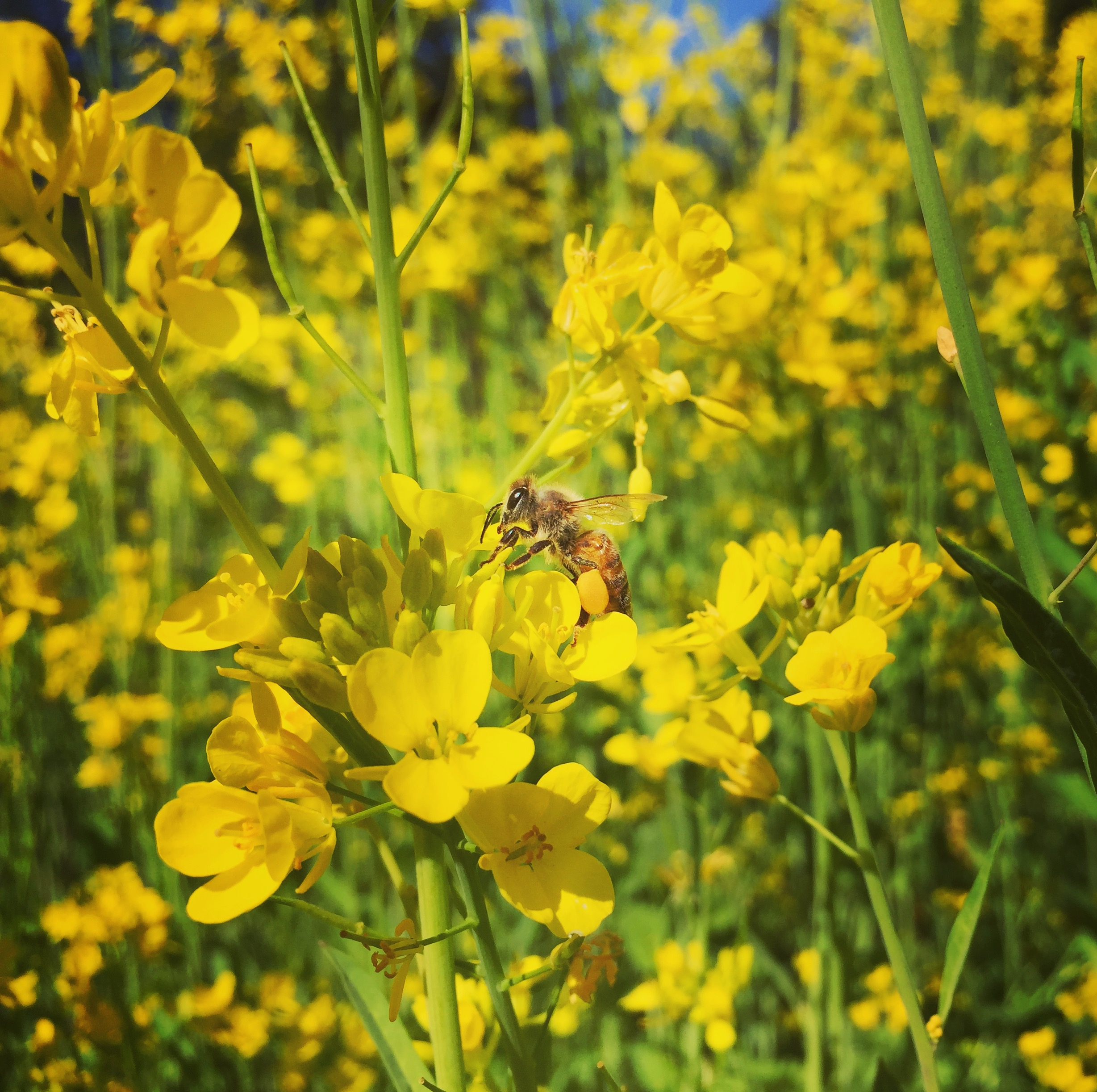 AriellaDaly_yellow_flowers