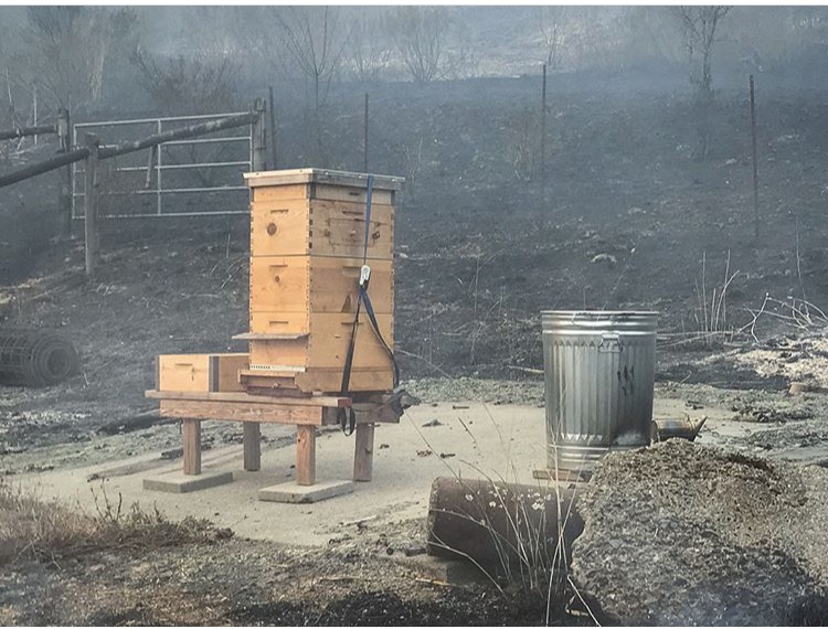 Hives saved by firefighters at the property of Robert Coury (www.RobertCoury.com) in Napa County. His home and the bees were saved as of yesterday, but the fires continue and conditions remain unstable. To see more photo documentation visit his Instagram account: @spiritsearch.