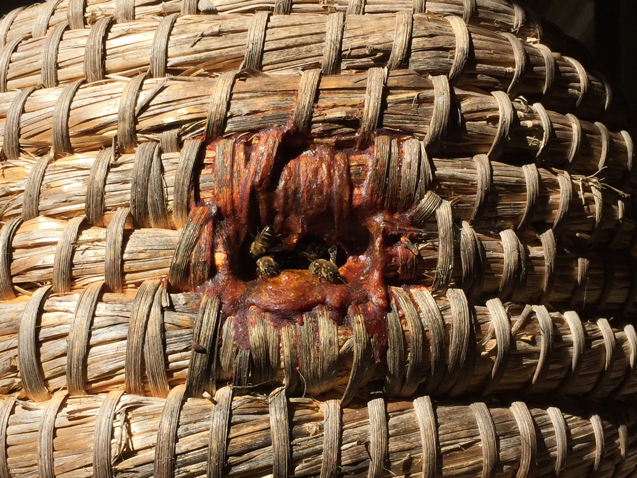 A beautiful example of a well propolized entrance to a skep hive I visited in England.