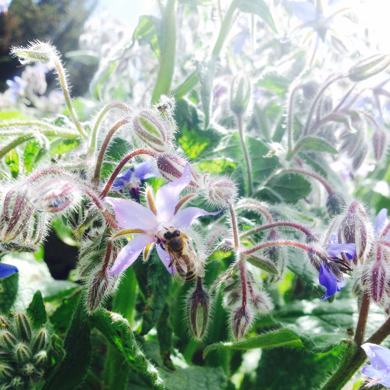 AriellaDaly_bee_on_flower