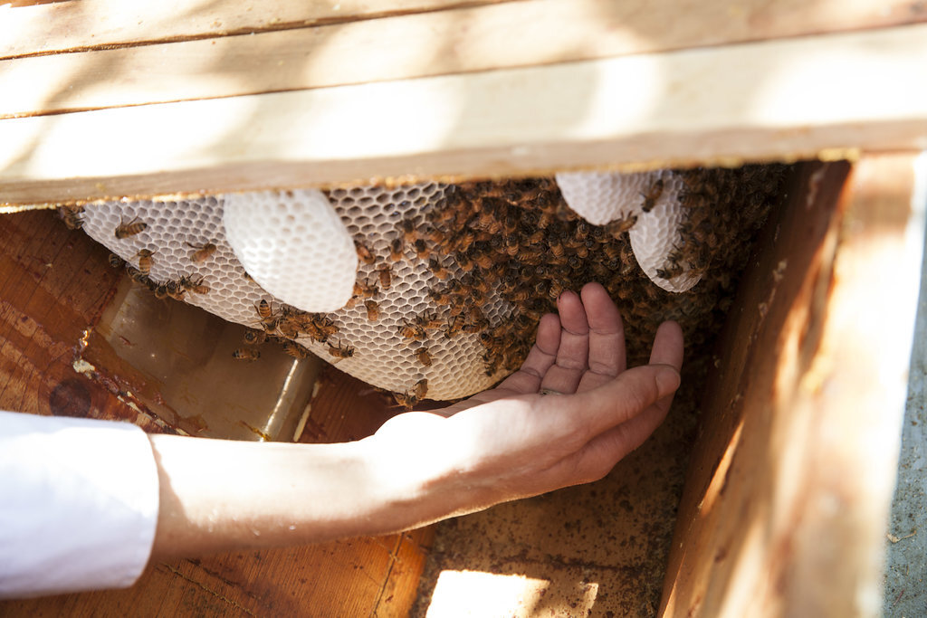 touching bees