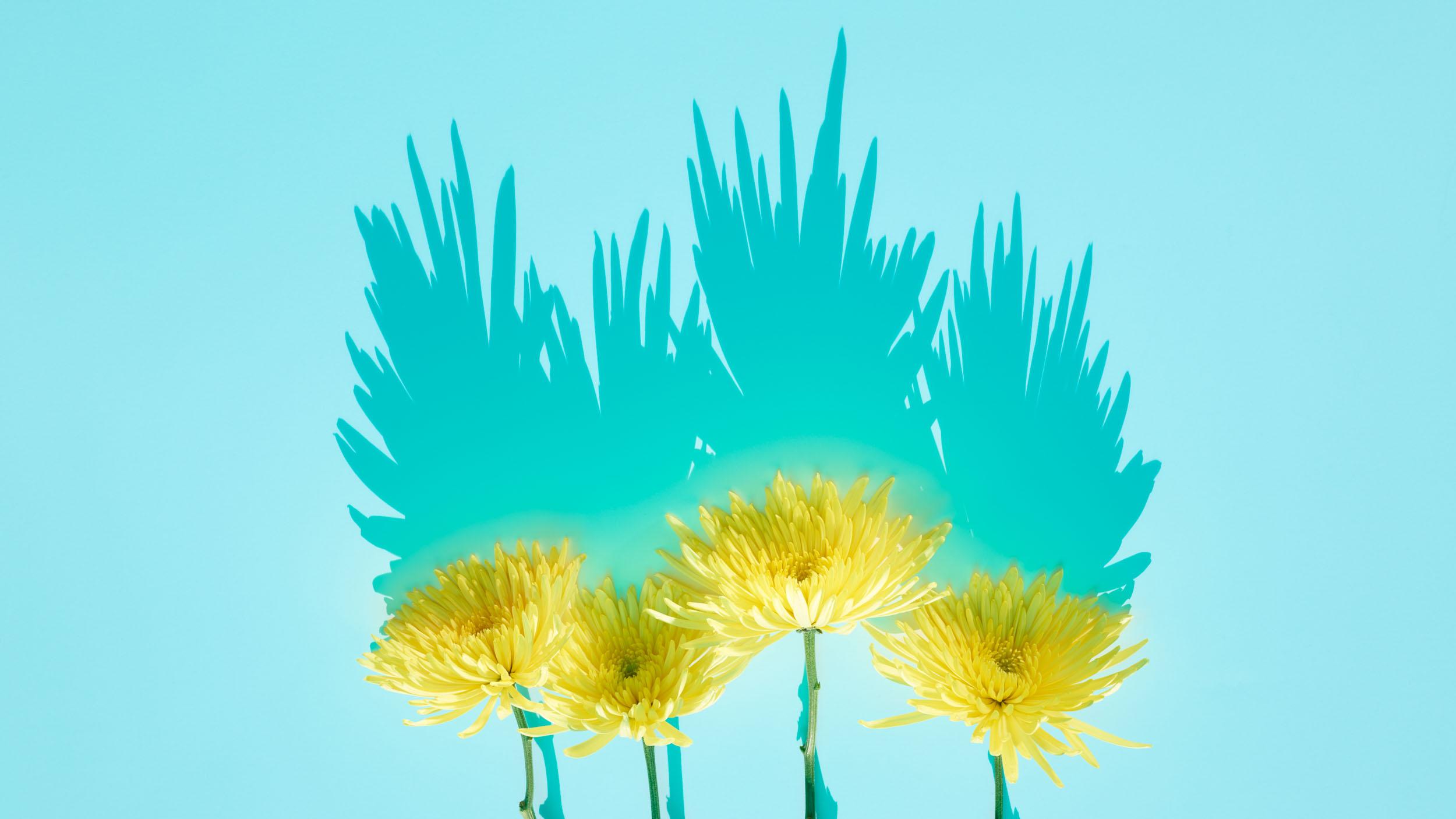 170908_FlowerPeak_2299_c32261-PB-3.jpg