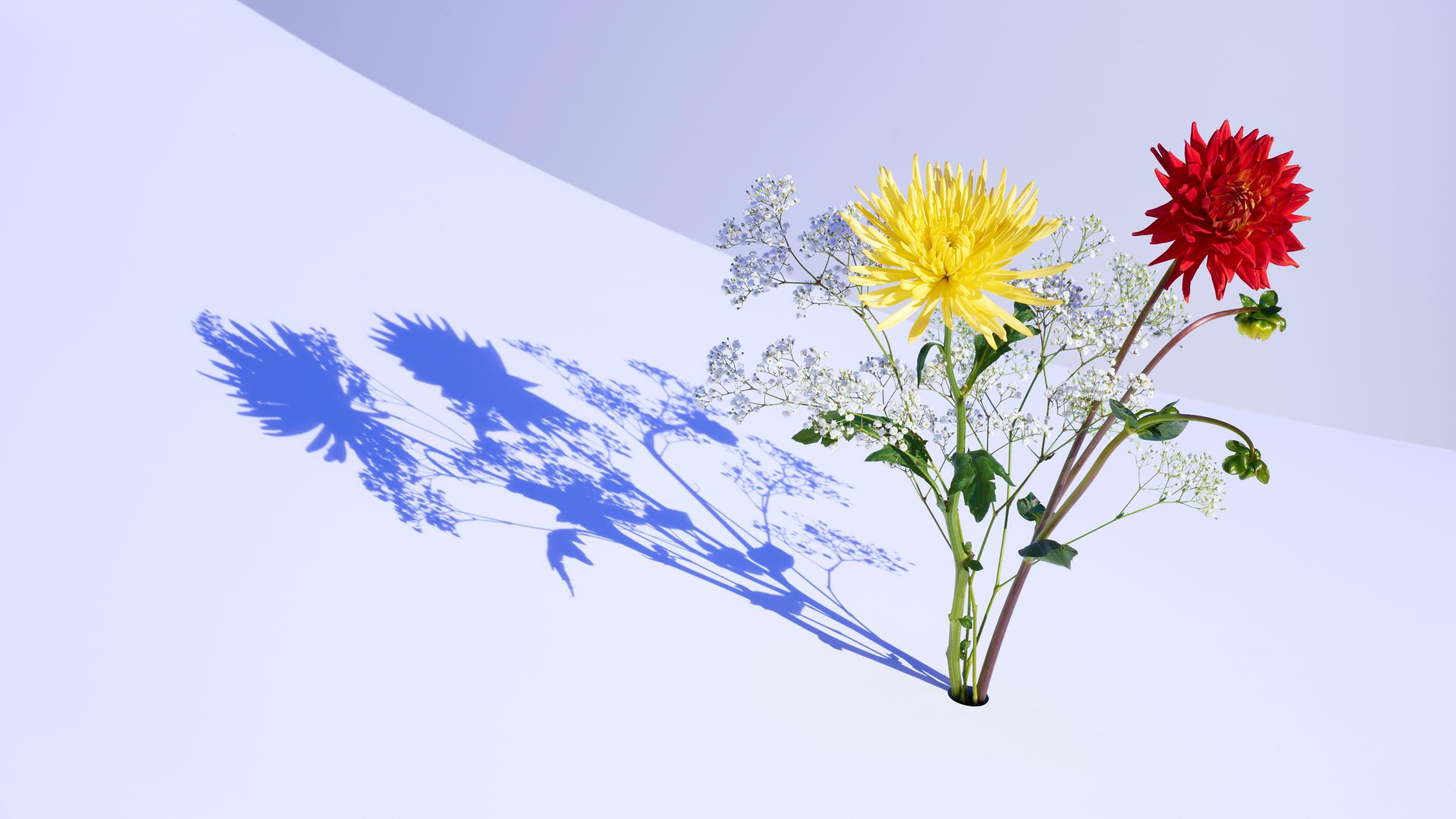 170907_FlowerHole_2299_V1_32142-PB-4.jpg
