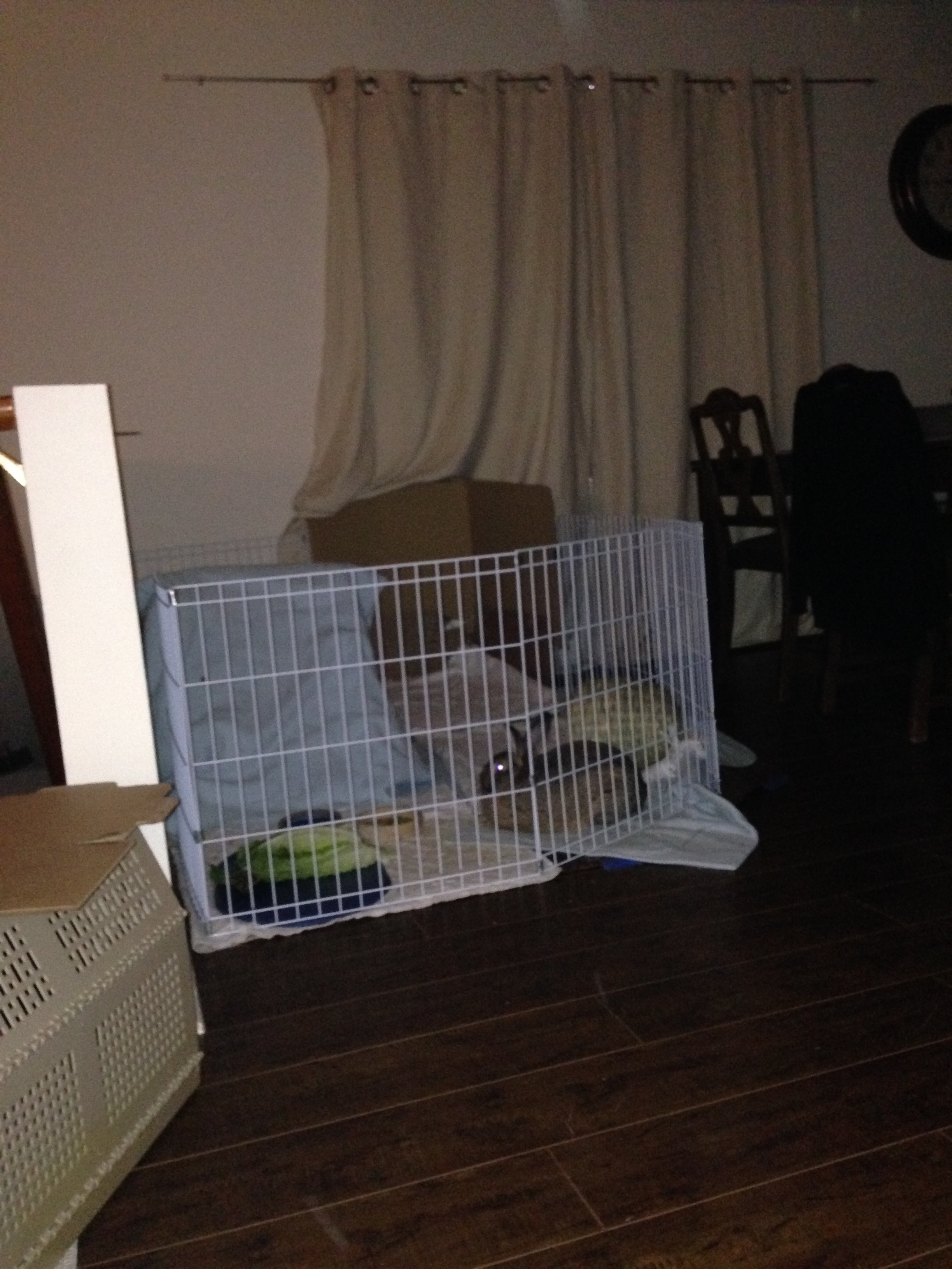 A pen is best for the first month. This helps a bunny know his area and develop good litter box habits. There is a plastic mat for his water bowl and lettuce. A small bowl for some pellets, and cardboard to play with and chew. For a big bunny, you will still want to let him/her explore every night for exercise.