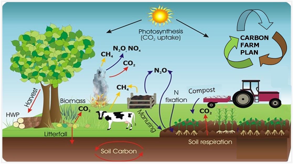 carbonpic.jpg