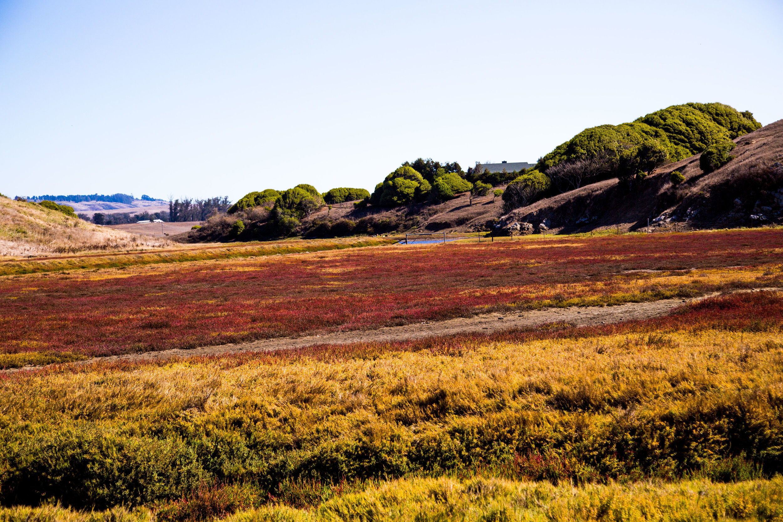 True Grass Farms