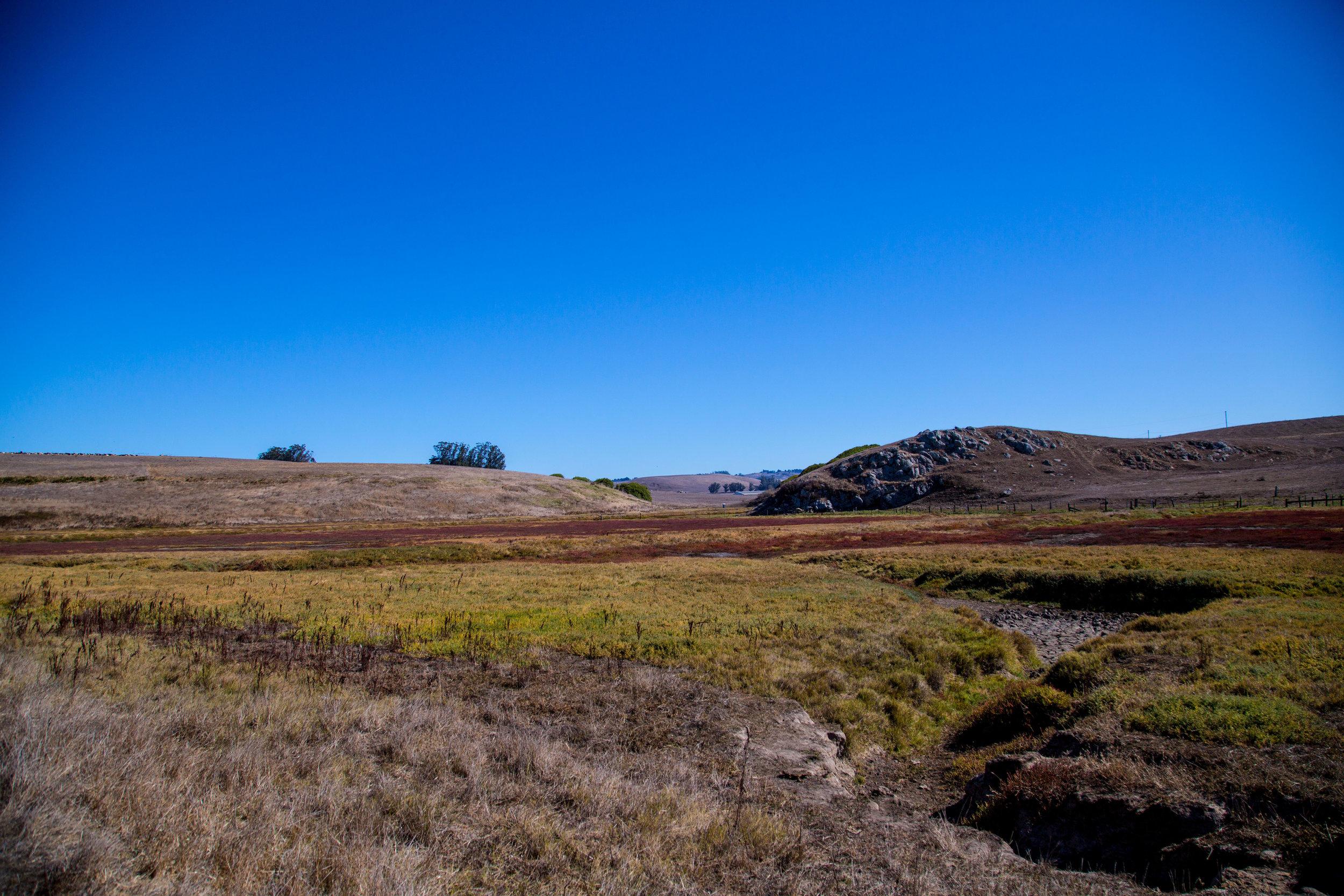 True-Grass-Landscape7.jpg