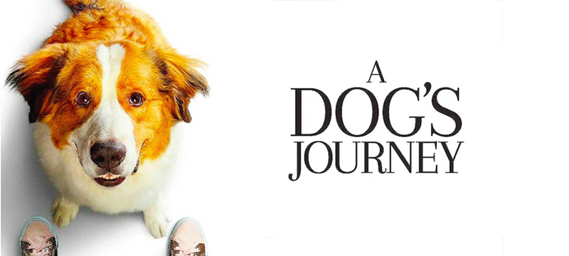 A-Dog's-Journey-for-Blog.png