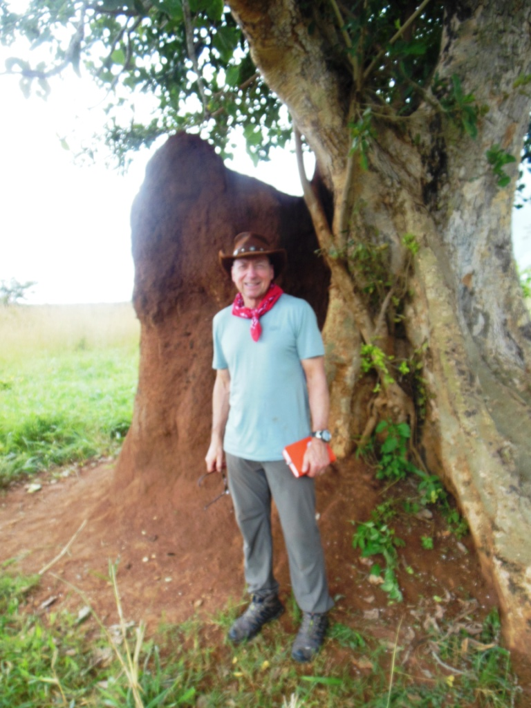 The Olam Tree