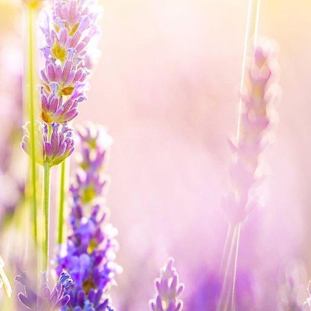 Ven a relajarte con nosotros! Deja la salud de tu piel en las mejores manos #spa #lavender  #relax #aromaterapia #saluddelapiel #costarica #estetica #curridabat