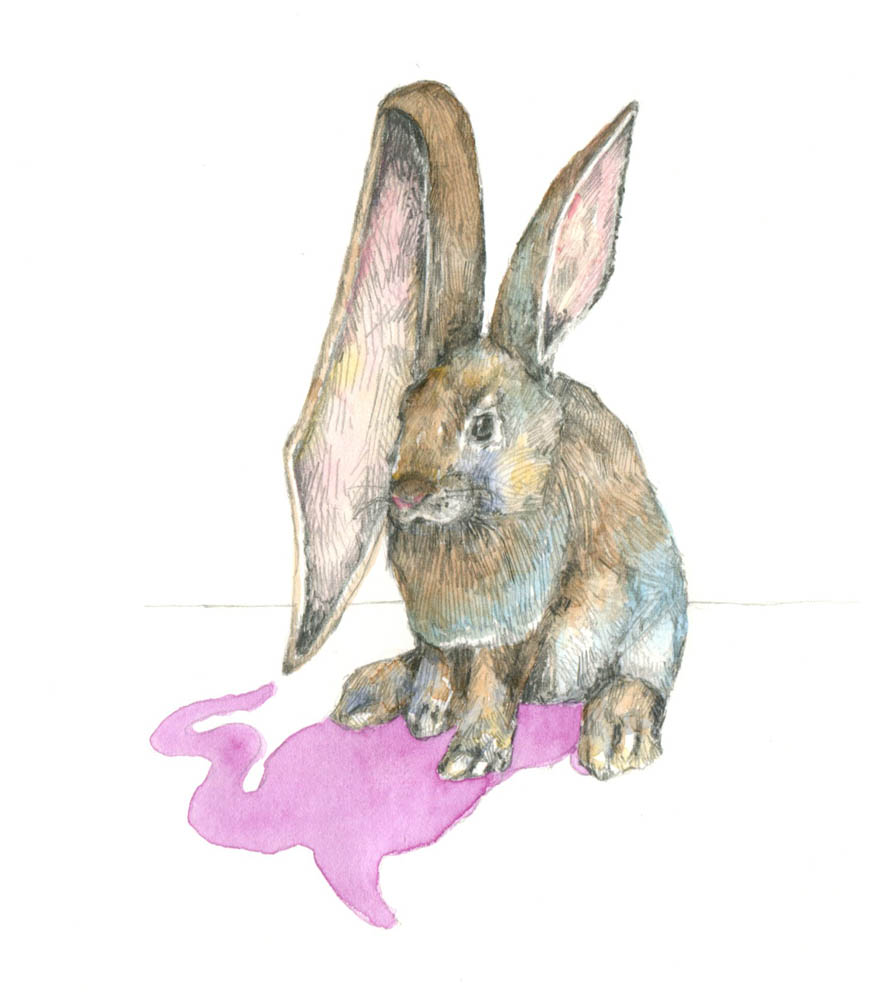 Rabbit001.jpg